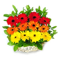 New Flower Basket 01